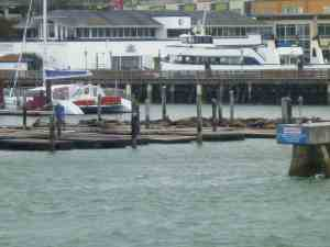 Sea lions lounging on Pier 39 as we cruise by