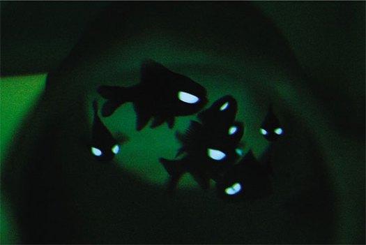 Courtesy of Aquarium of the Pacific