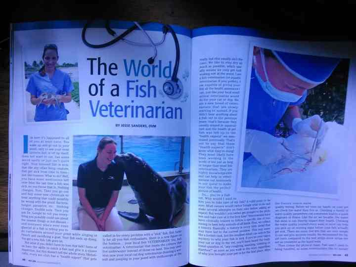 The World of A Fish Vet in KOI USA