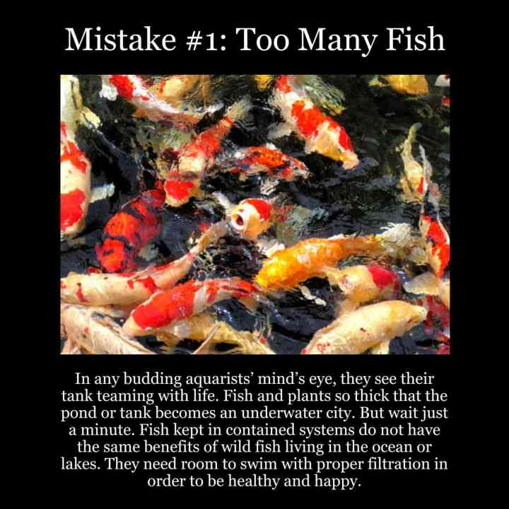 Top 5 Fish Mistakes – #1: Too Many Fish