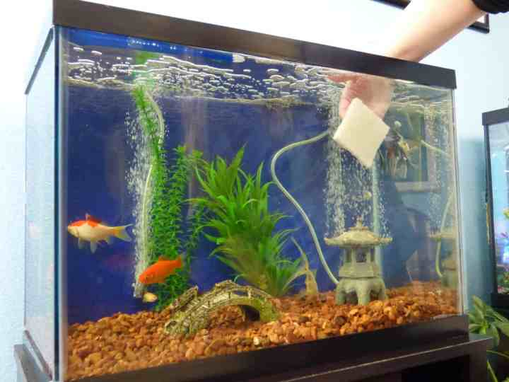 Troubleshooting Fish Systems
