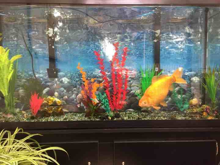 How Many Fish Per Gallon?