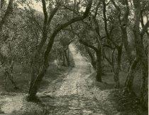 Strada Uliveto