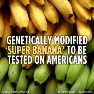 GMObanana1
