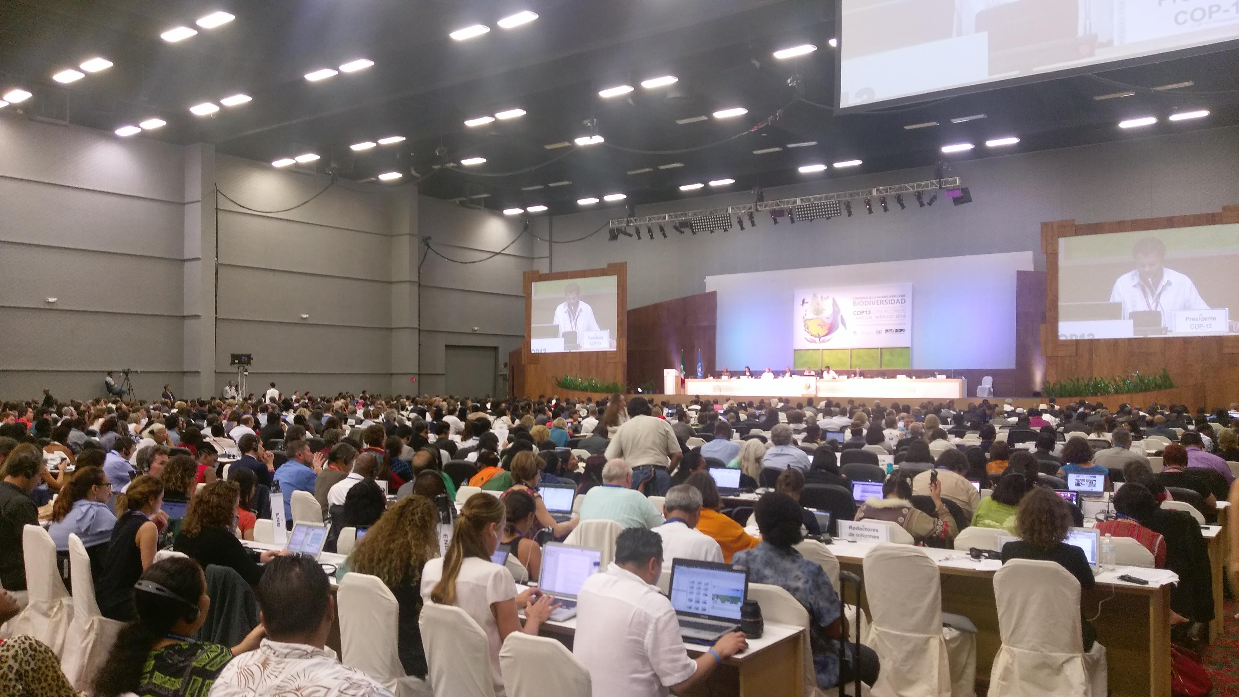 plenarycbd