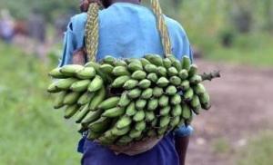 super banana