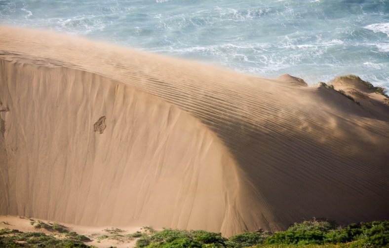 Point Reyes Sand Dunes