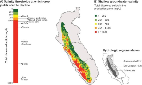 Salinity in shallow groundwater