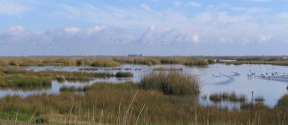 Grasslands WMA