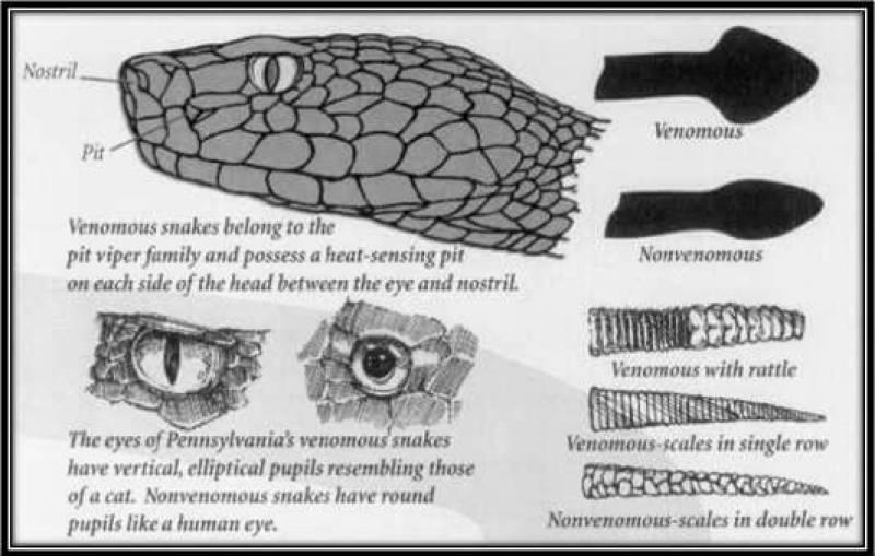 snakeid