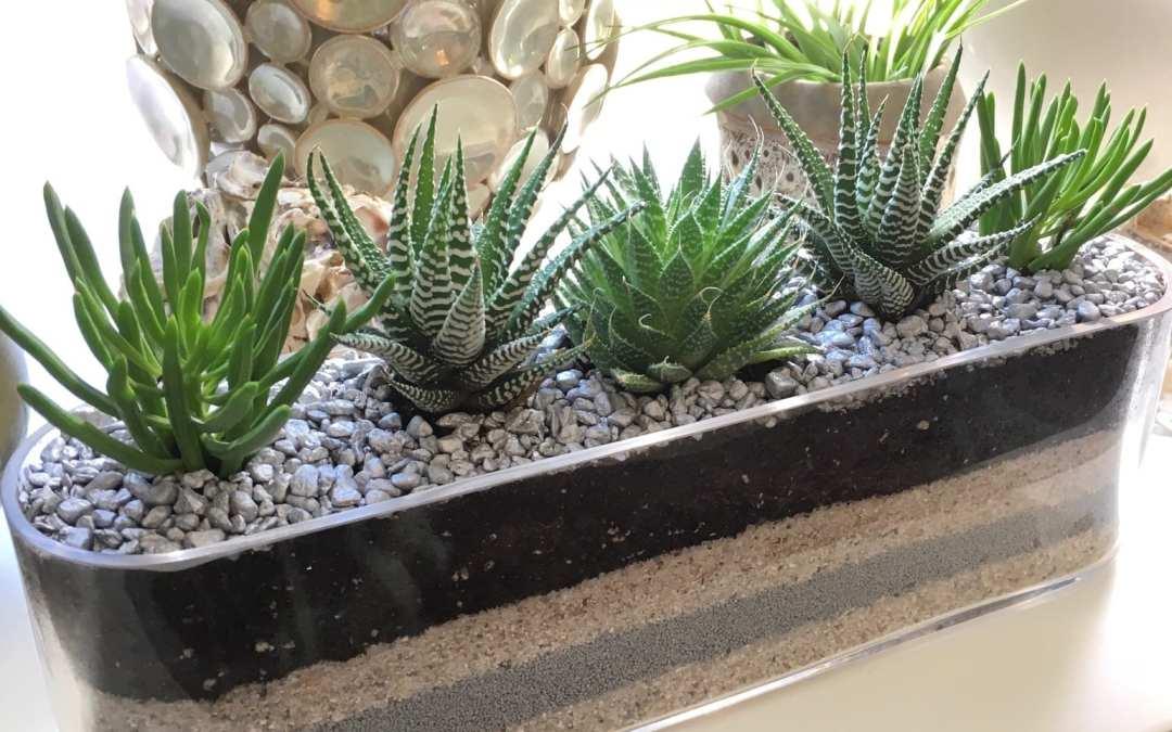 City Garden Design terrarium