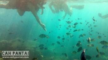 Ikan-ikan disini hilir mudik mengitari kami seakan ingin berkenalan