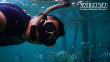 Snorkeling di pinggiran Derawan