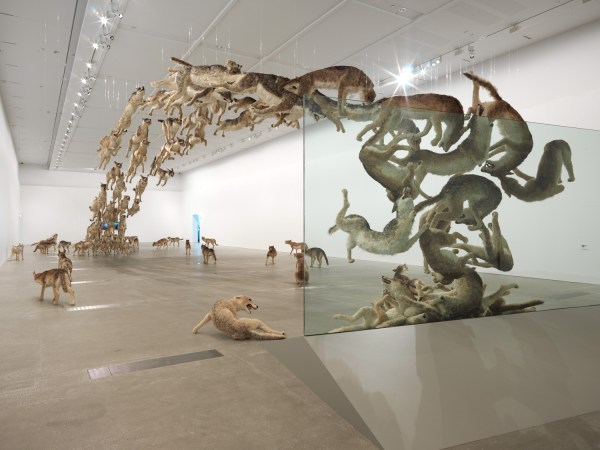 Cai Guo Qiang Head On Art