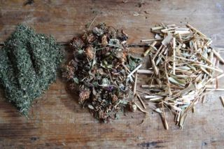 Nourishing herbs for infusions