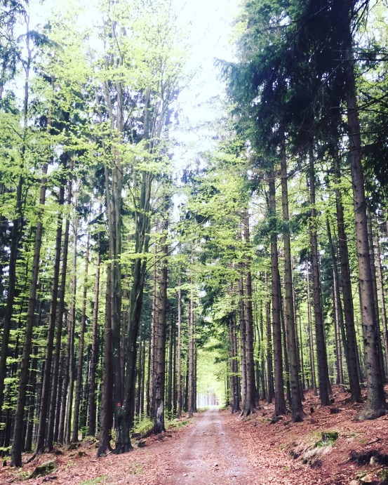 Forests in Czechia