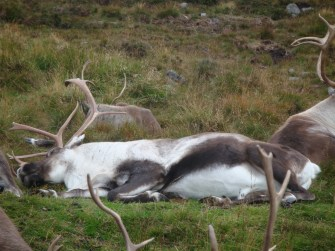 A sleepy Porjus