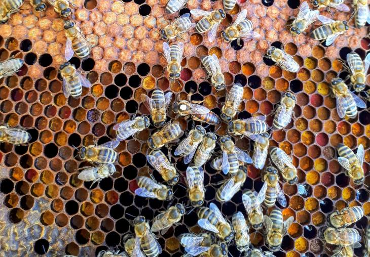 Bees pollinate our food.