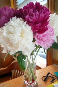 Beautiful peonies. I think I found a new favorite.
