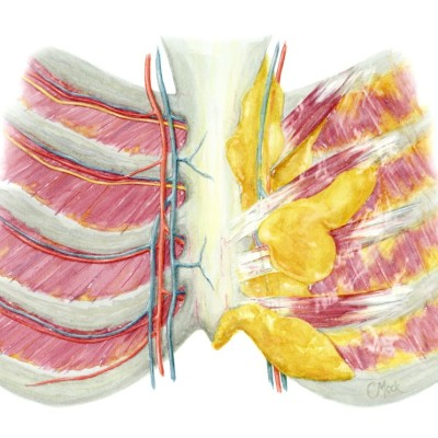 Internal Thoracic Wall / Watercolor