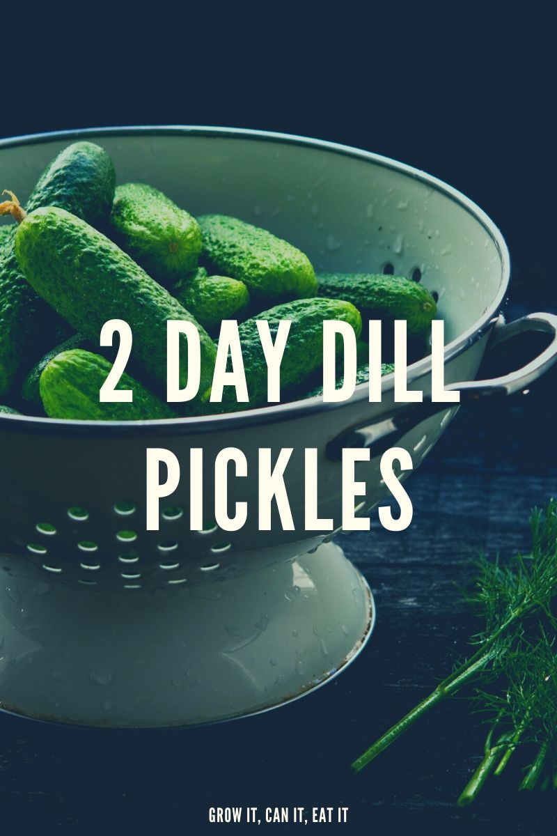 2-Day Dill Pickles