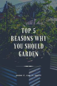 Read more about the article Top 5 Reasons Why YOU Should Garden