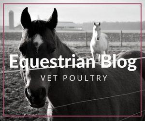 Equestrian Blog Vet Poultry Caitlyn Andrews