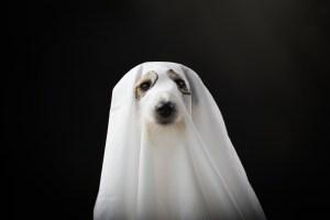 copywriting-dog-pet-marketing