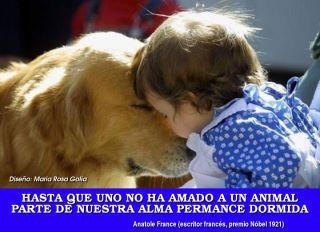 Hasta que no hayas amado a un animal, parte de tu alma estará dormida