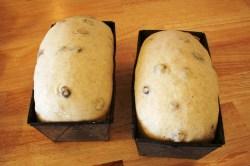 Proofed Raisin Bread