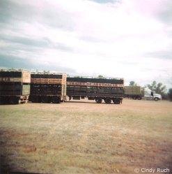 Trains of Australia