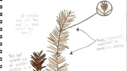 Lesson Plan Introduction to Scientific Sketching