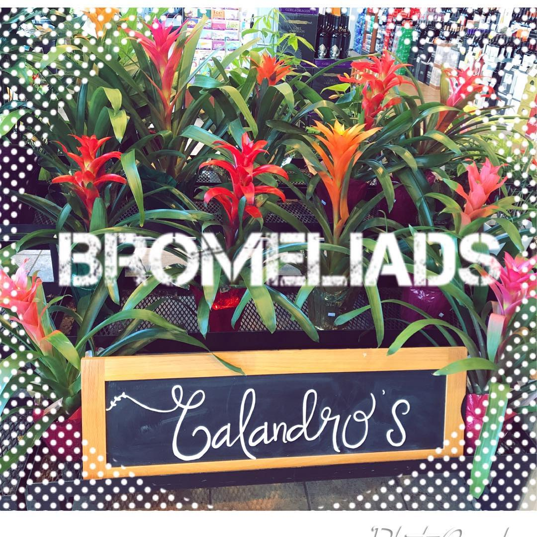 SHOP our plants! #FunFacts Bromeliads grow all year long, most bloom only once, and they…