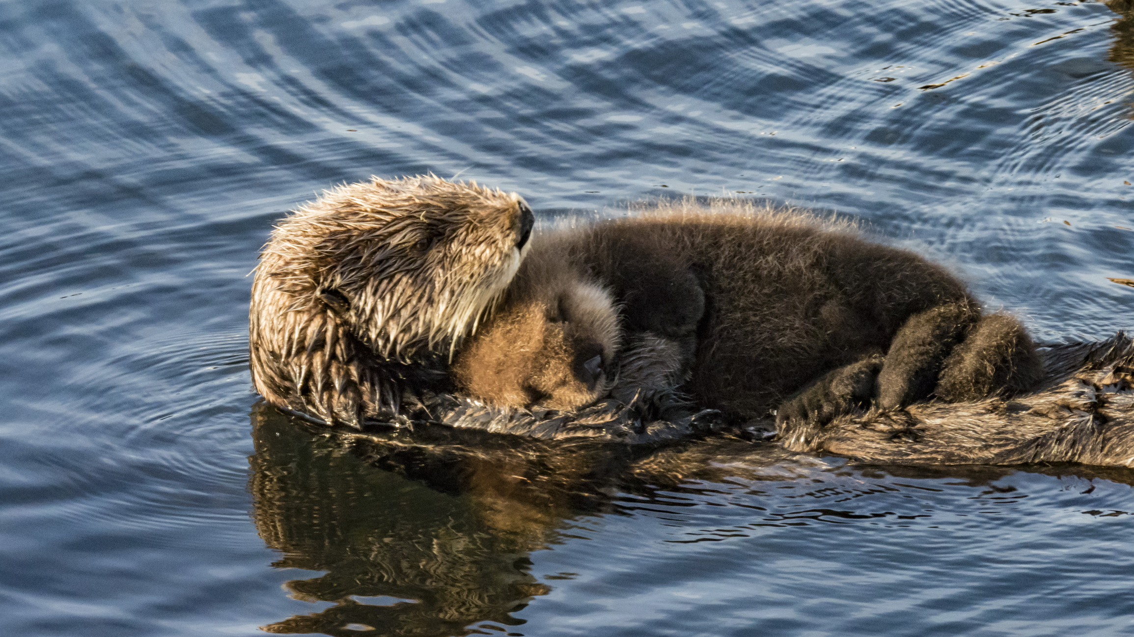 Major Changes Proposed To Endangered Species Act