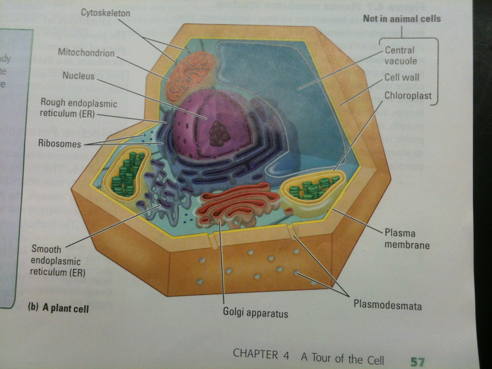 3d Diagram Of The Cell Boom39in Science