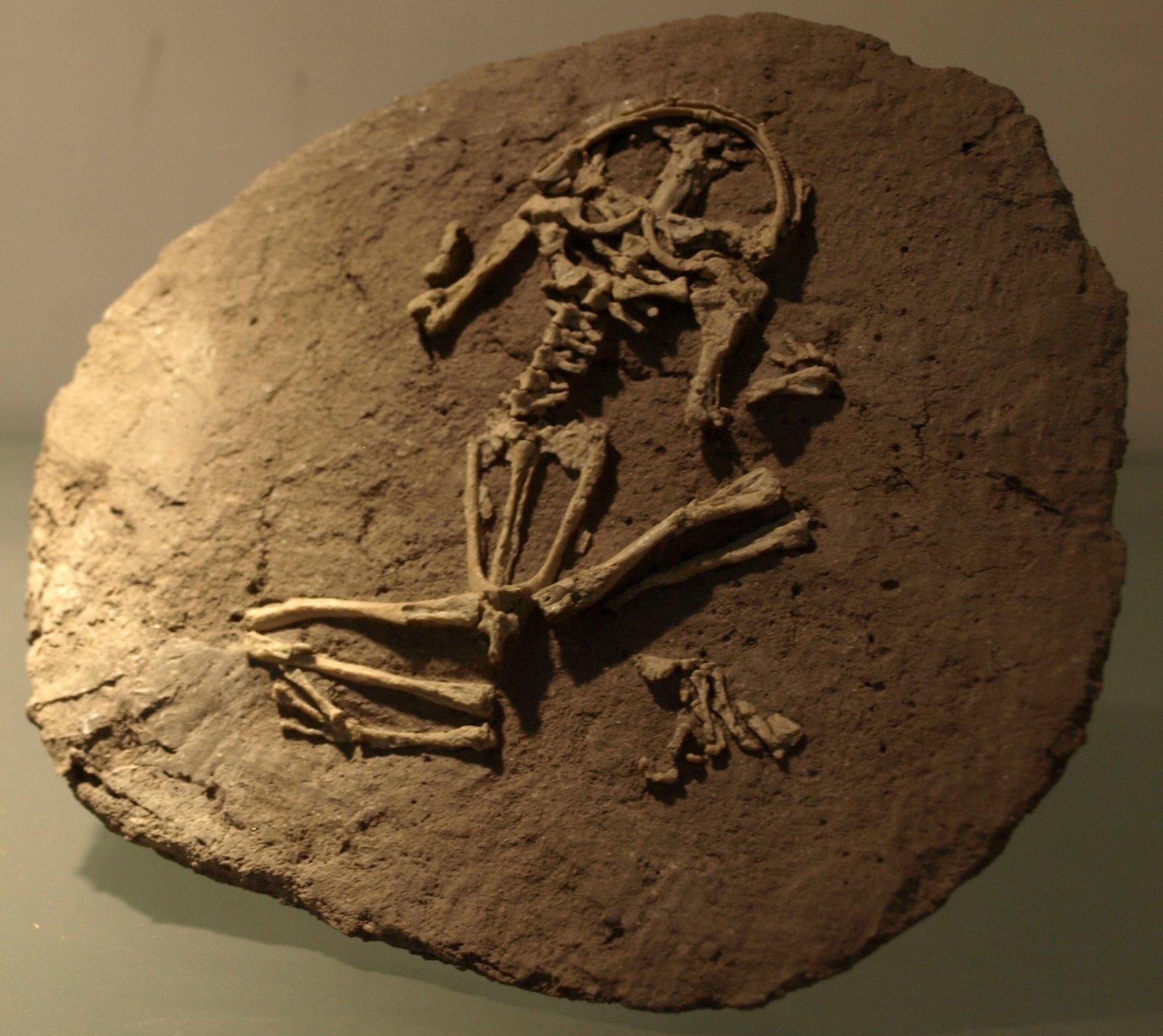 Types Of Fossils Mr Calaski