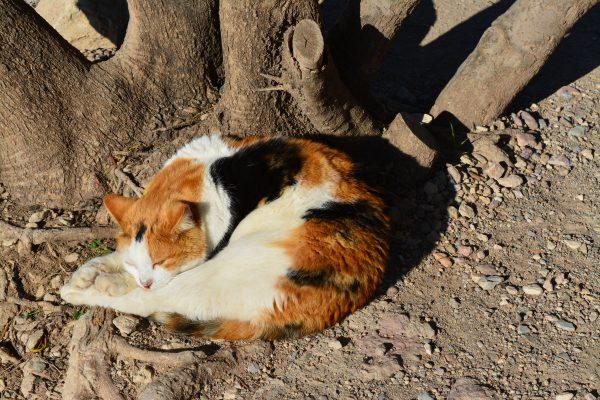 pisici-in-atena