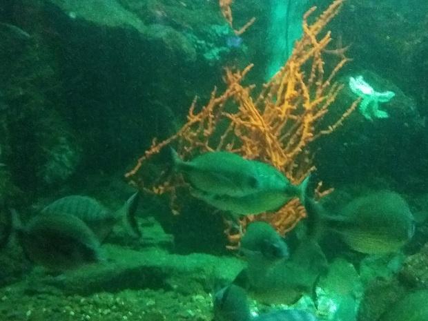 aquarium dubrovnik