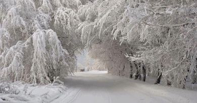 top 10 iarna