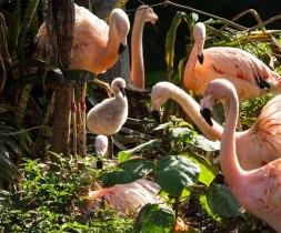 Loro Parque Tenerife, flamingo