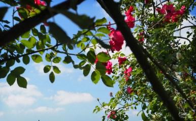 excursie in Banat - Eutopia Gardens