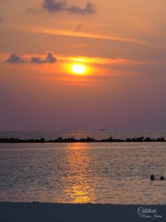 Apus in Maldive
