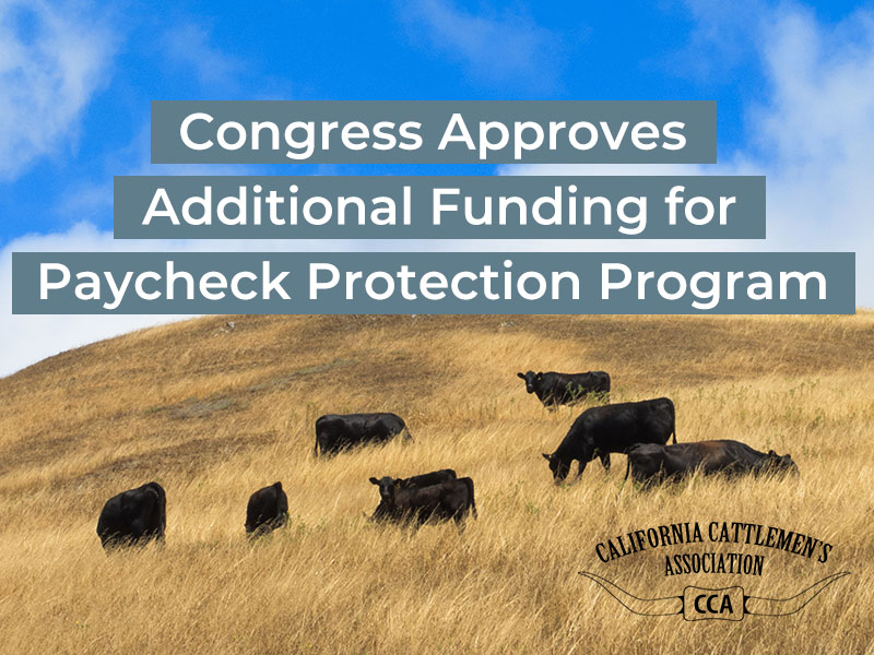 Congress Approves Additional Funding for Paycheck Protection Program