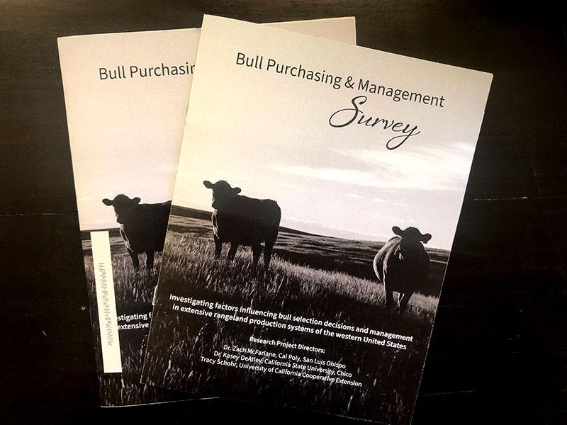 bull survey