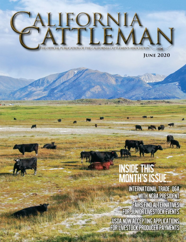 June CCA Magazine cover of cowboy