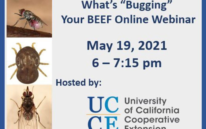 "What's ""Bugging"" Your Beef Webinar"