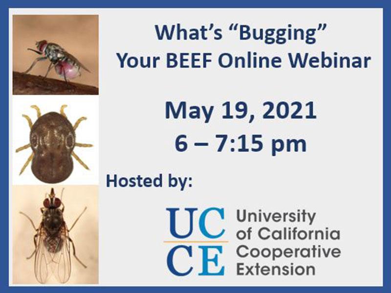 "What's ""Bugging"" Your Beef Webinar"