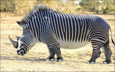 Freak ... un rinoceronte a rayas