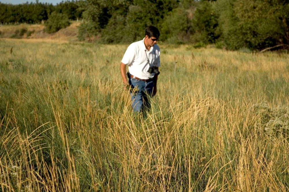 Watershed Coordinator walks in observation amid native grass