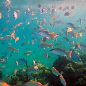 DSCF2257 mass of fish